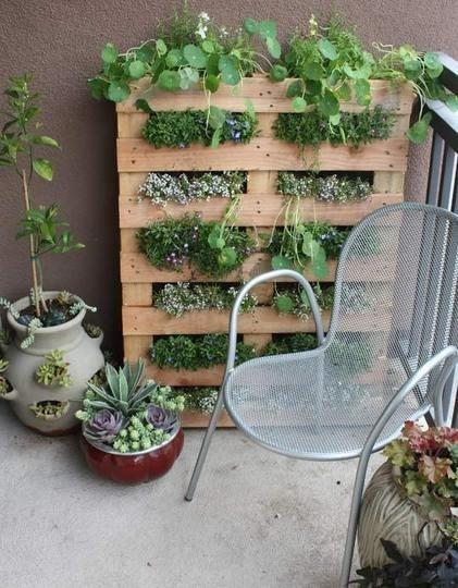 decoracion exterior con huerto