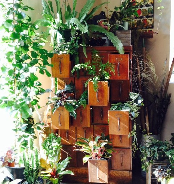 huerto en mueble reciclado