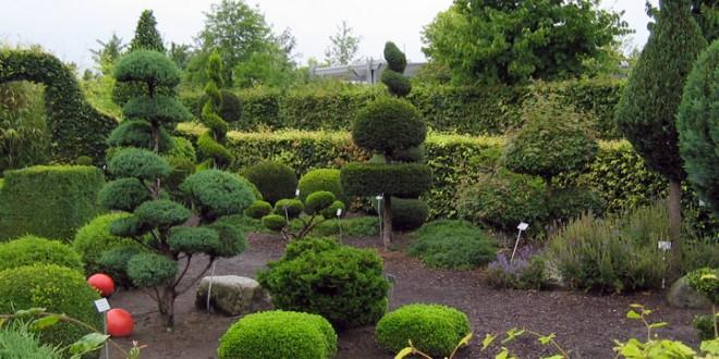 Dise o arboles jardin hoy lowcost for Arboles para jardin