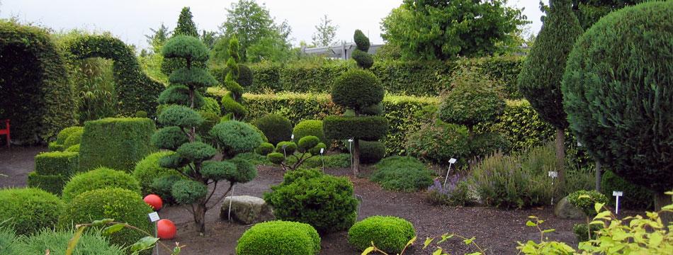 diseño arboles jardin