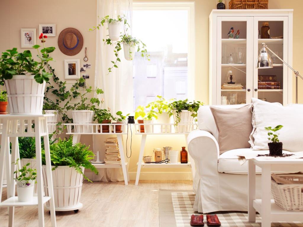 plantas para decoracion actual