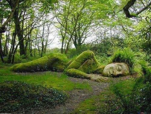 plantas esculturales jardines